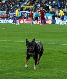 Un perro saltó al campo en la 1ª parte.