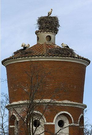 Cigüeñas en la torre del depósito de agua de Valladolid. | Carlos Espeso