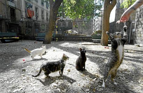 Gatos callejeros en la plaza Canonge. | Quique García