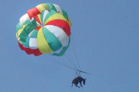 Imagen del burro en el parapente. | Afp