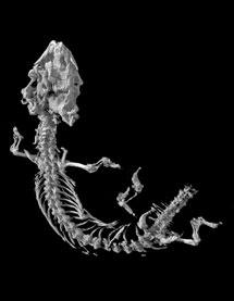 Escáner del fósil. | Robert Reisz.