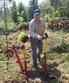 Reforestacion de arboles definicion