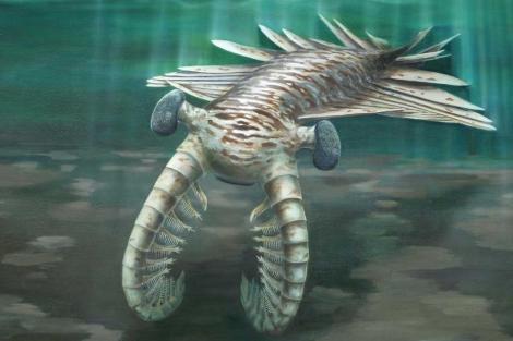 Recreación del cazador 'Anomalocaris', de hace 500 millones de años. | 'Nature'