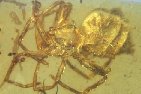 Araña de hace 100 millones hallada en Teruel. | Fundación Dinópolis