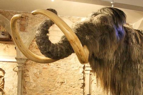 Reproducción de un mamut lanudo. | EL MUNDO