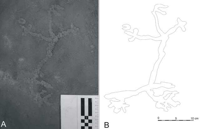 El petroglifo fue hallado en Lapa do Santo. | Foto: Neves WA, Araujo AGM, Bernardo DV, Kipnis R, Feathers JK