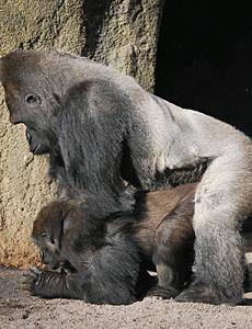 precio competitivo 55243 3dd29 Sorpréndase con el Apareamiento de Animales - Imágenes en ...