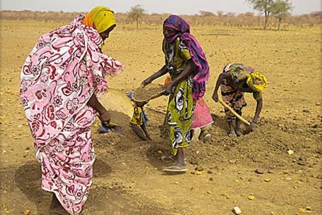Mujeres buscan grano en un hormiguero. | Luigi Benedicto