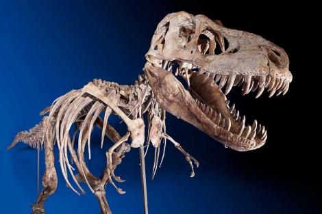 El esqueleto mide 2,4 metros de alto y 7,3 de largo.| Heritage Auctions