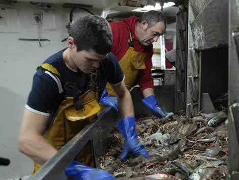 Los pescadores seleccionan los descartes que tirarán por la borda. | KEO Films
