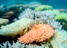 Imagen de la Barrera de Coral. | Efe