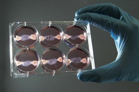 Placas de Petri con carne 'cultivada'. | Francois Lenoir | Reuters